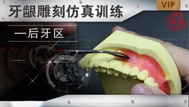 图片 牙龈雕刻仿真训练-后牙区